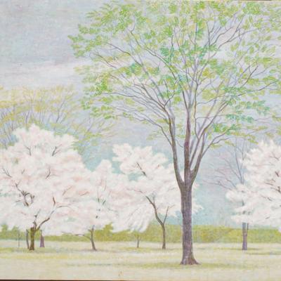 桜の咲く頃 / The Cherry Blossoms |  雲肌麻紙 岩絵の具 にかわ(三千本)  80.3 x 100.0 cm 1991  Linen mixed paper,Iwaenogu(powdered rock pigments),Nikawa(gelatin)